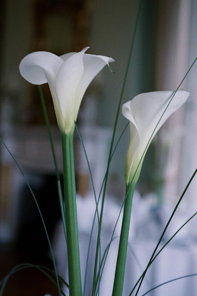 Orchids in Window Light .